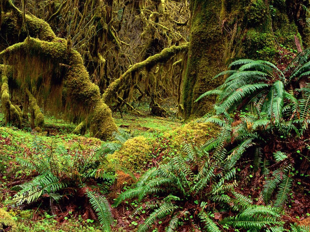 Hall-of-Mosses-Trail-Olympic-National-Park-Washington