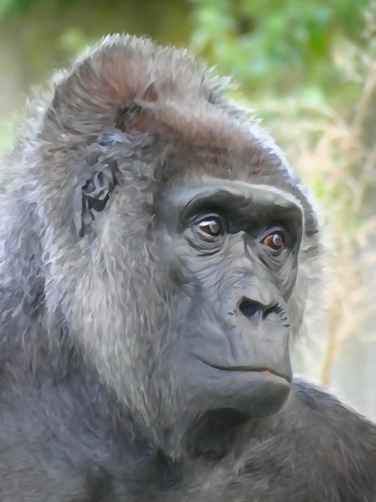 This lovely lady is over fifty in the Berlin Zoo.