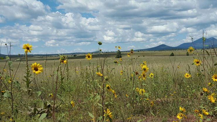 garland prairie flowers