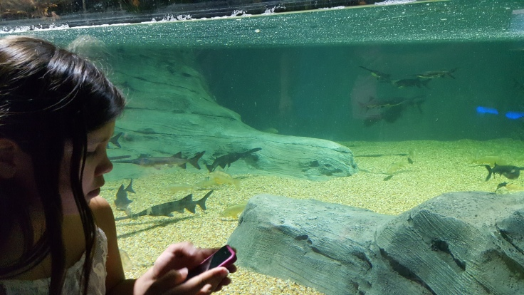 Taking pictures of the Gars and Paddle Fish