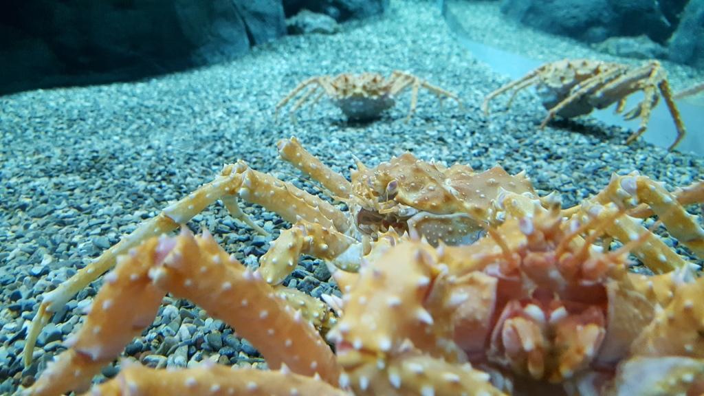 Alaskan King Crabs