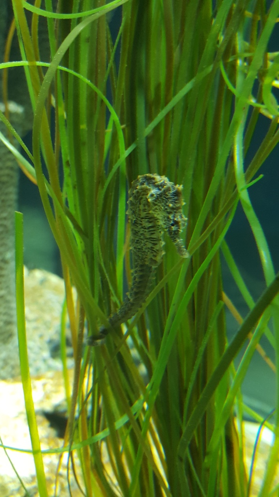 Sea Horses sit still for pictures. Whew!