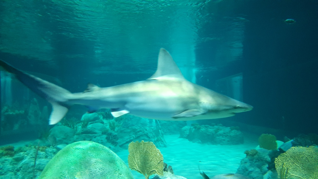 Sharks do not pose for pictures.